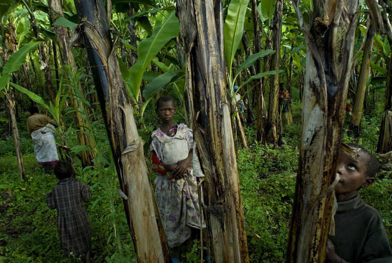 Reziki, 10, stands in the banana grove adjacent to Magunga camp for Internally displaced people where the IDPs have been burying their dead dying of starvation and sickness in the camps since fleeing their villages after fighting began about one year ago between Congolese Government soldiers and Tutsi rebel leader Nkunda outside Goma, in the east of the Democratic Republic of Congo, December 7, 2007.  The IDPs in Magunga complain that because of an upsurge of fighting around Magunga, they have not received any food distributions in over a month, and some IDPs are allegedly dying of starvation.  In the last 12 months, about 410,000 Congolese civilians have been displaced by new fighting, and coupled with the previous 400,000 from past years, there are now about 800,000 internally displaced people in the DRC.  (Credit: Lynsey Addario for The New York Times)
