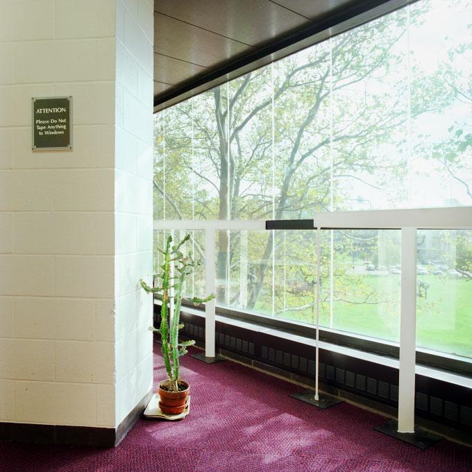 Decorative Plant, Bunker Hill Community College