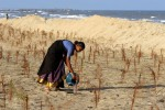 A woman water a newly planted trees on the sand where her fishing village used to stand.