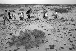 After receiving first aid, food, water and dry clothing, refugees who survived the crossing of the Gulf of Aden, walk across the dunes to the road where they can be picked up and taken to the reception center run by UNHCR near the Village of Ahwar in southern Yemen Monday, December 1, 2008.