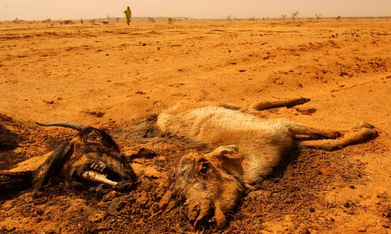 Unforgiving desert of Darfur.