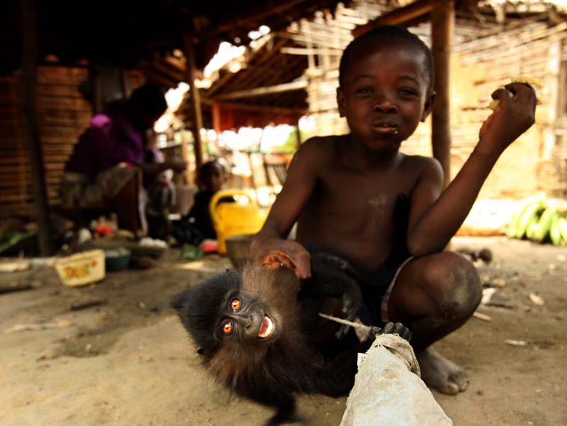 Monkey for sale for food or pet in the Village of Babogombe in Yoko National Reserve March 25, 2006. The village is very poor and depends heavily on forest, including consumption of bush meat. Close contacts with primates are often blamed for the cause of deadly Ebola virus outbreak in Central Africa.