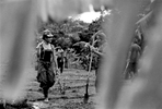 FARC working in the fields, Caqueta region, Colombia 2000