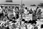 Goat slaughtering at the beginning of Bakr-id, an important Muslim festival, Mogadishu 2002