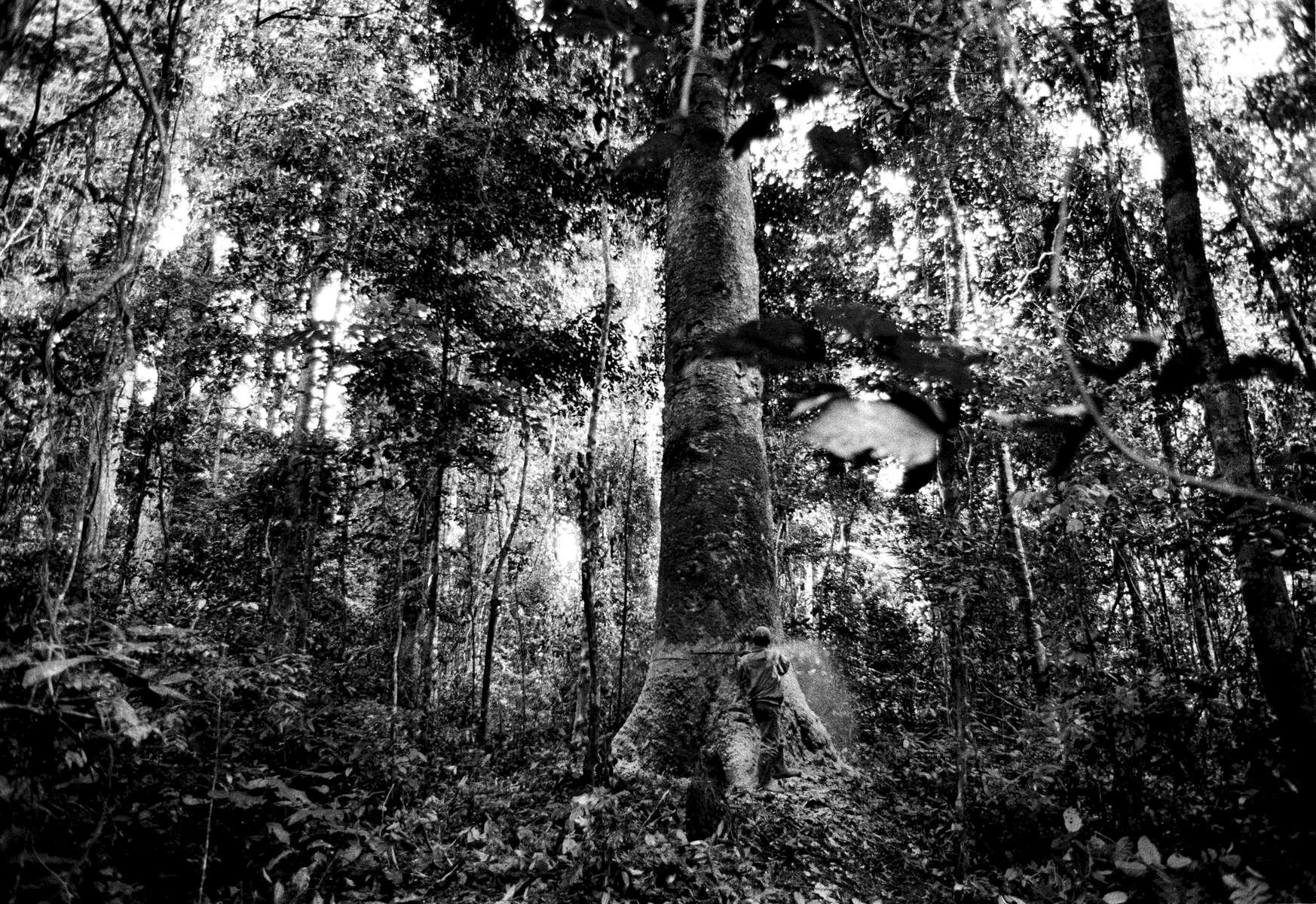 Logging in the Minkebe Reserve, Gabon 2002