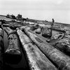 Floating lumber yard, Port Gentil, Gabon 2002