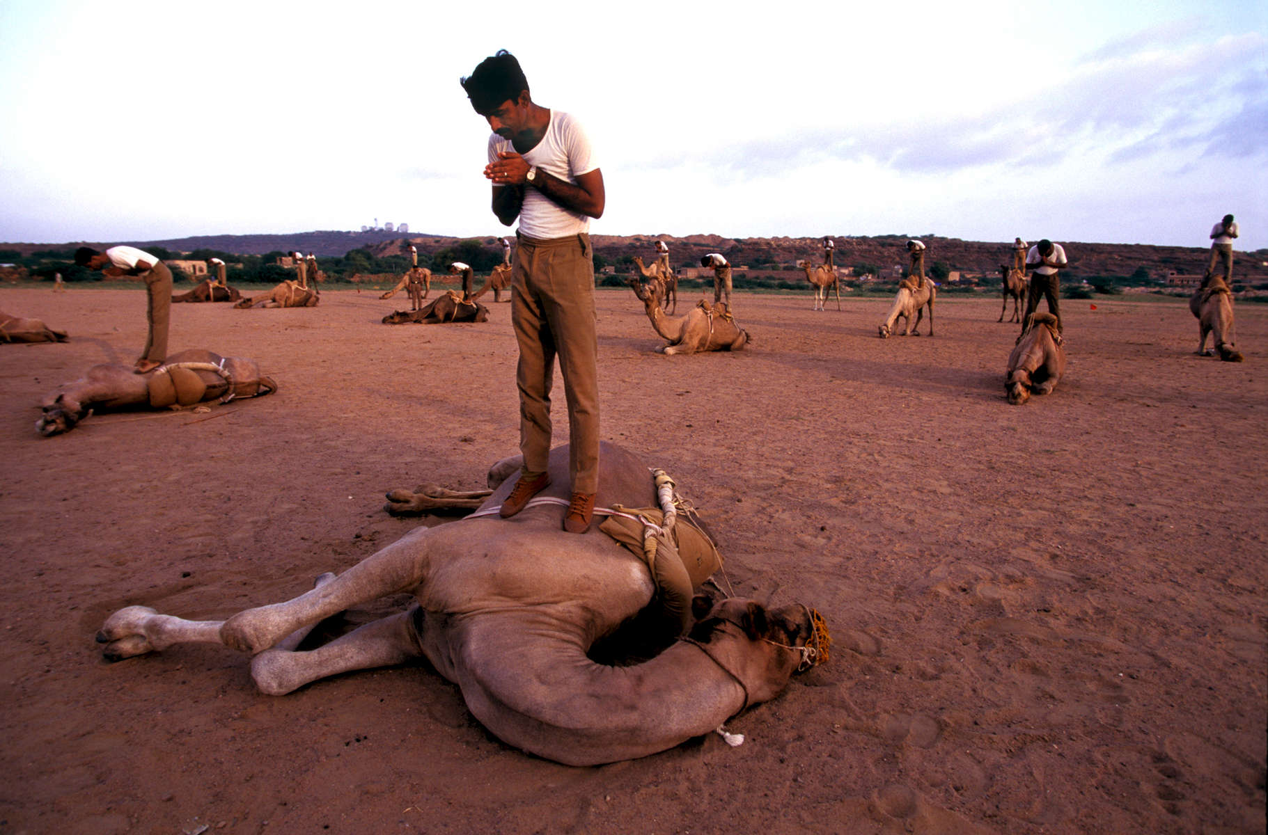 India's Border Security Force regional headquarters at Jodhpur's training centre. Special camel training for ceremonial purposes takes 2 years to train a rider and 3 years to train a camel.1998