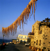 only in Greece ....  drying octopus in Nisyros