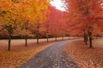 FALL_PATH_trees