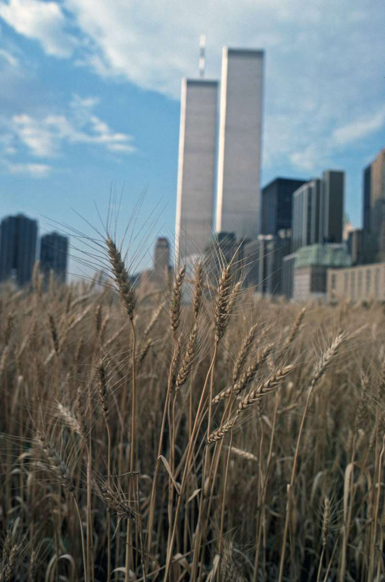 WTC-wheat-Public-Art-Fund-copy