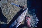 barracuda_feet_ret