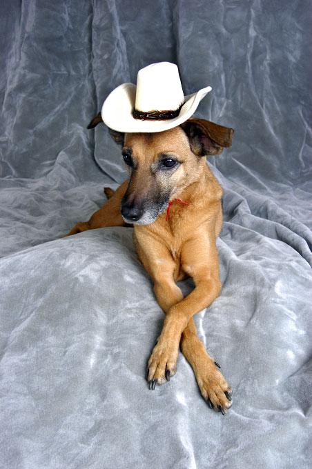 cowboy_portrait-copy