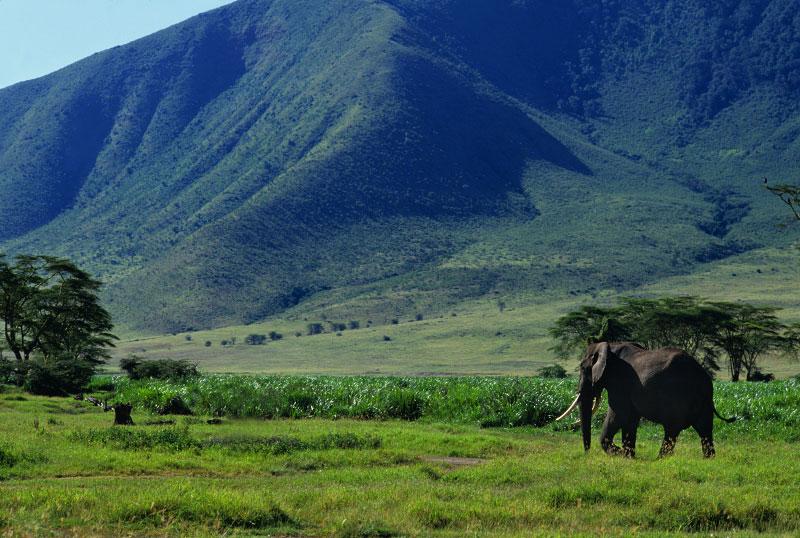 elephant_walk-copy