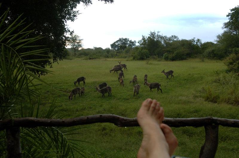 feet_animals-copy