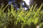 grass-copy-1