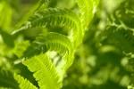 green-copy