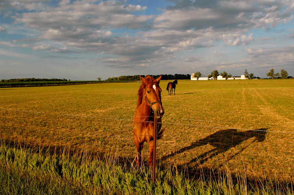 horse1s