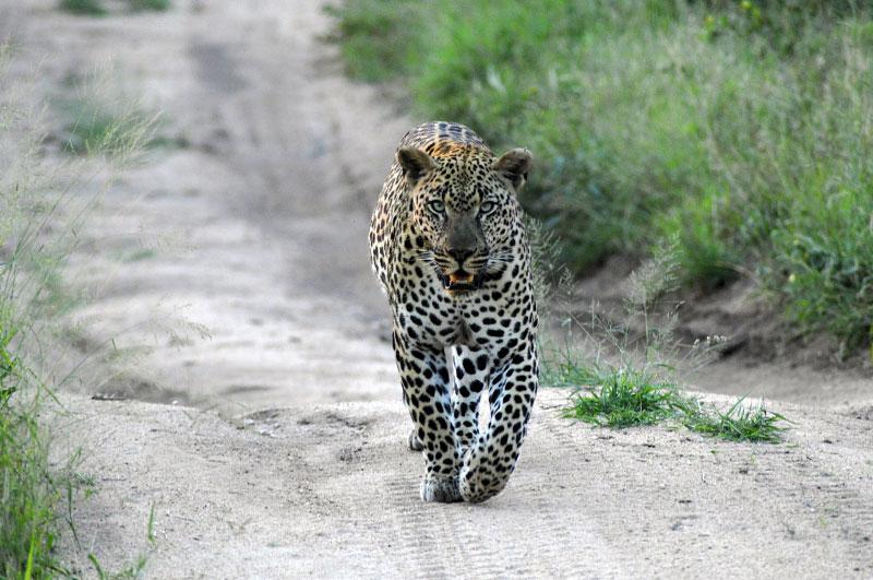 Mala Mala, South Africa