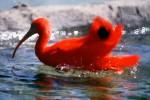 redbird-copy