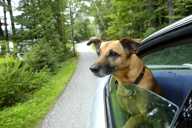 sparky-on-road