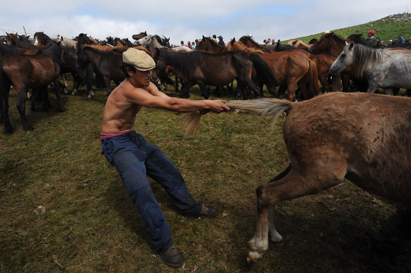 An aloitador, (fighter) tries to control a wild horse during the Rapa Das Bestas festival on July 3, 2010 in Sabucedo, Spain. Wild horses are caught in the hills and taken down to the Corral of Sabucedo where they are sheared and tagged in the Rapa Das Bestas or 'Shearing of the Beasts'. (Photo by Denis Doyle/Getty Images)