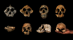 8-Skulls---Leakeys-Final