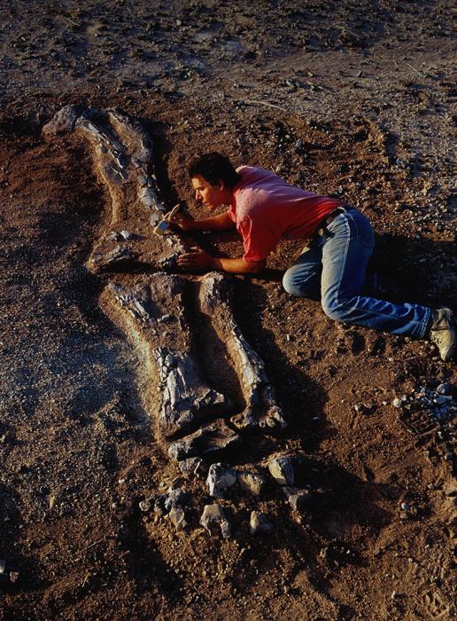 Archaeology Dinosaurs Bones Foot