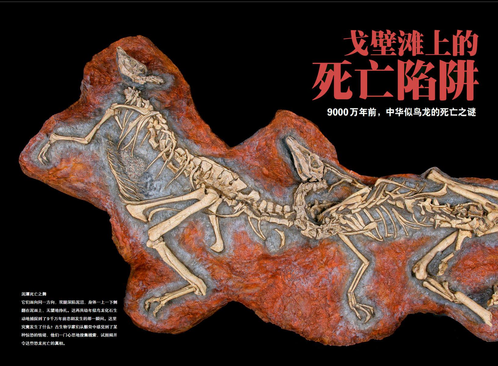 Ornithomimid Dinosaur Story from Gobi Desert