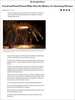 NY-Times-Spinosaur---Hettwer
