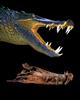 ST---Boar-Croc-Skull-and-Flesh-Model---Hettwer---2016---127B