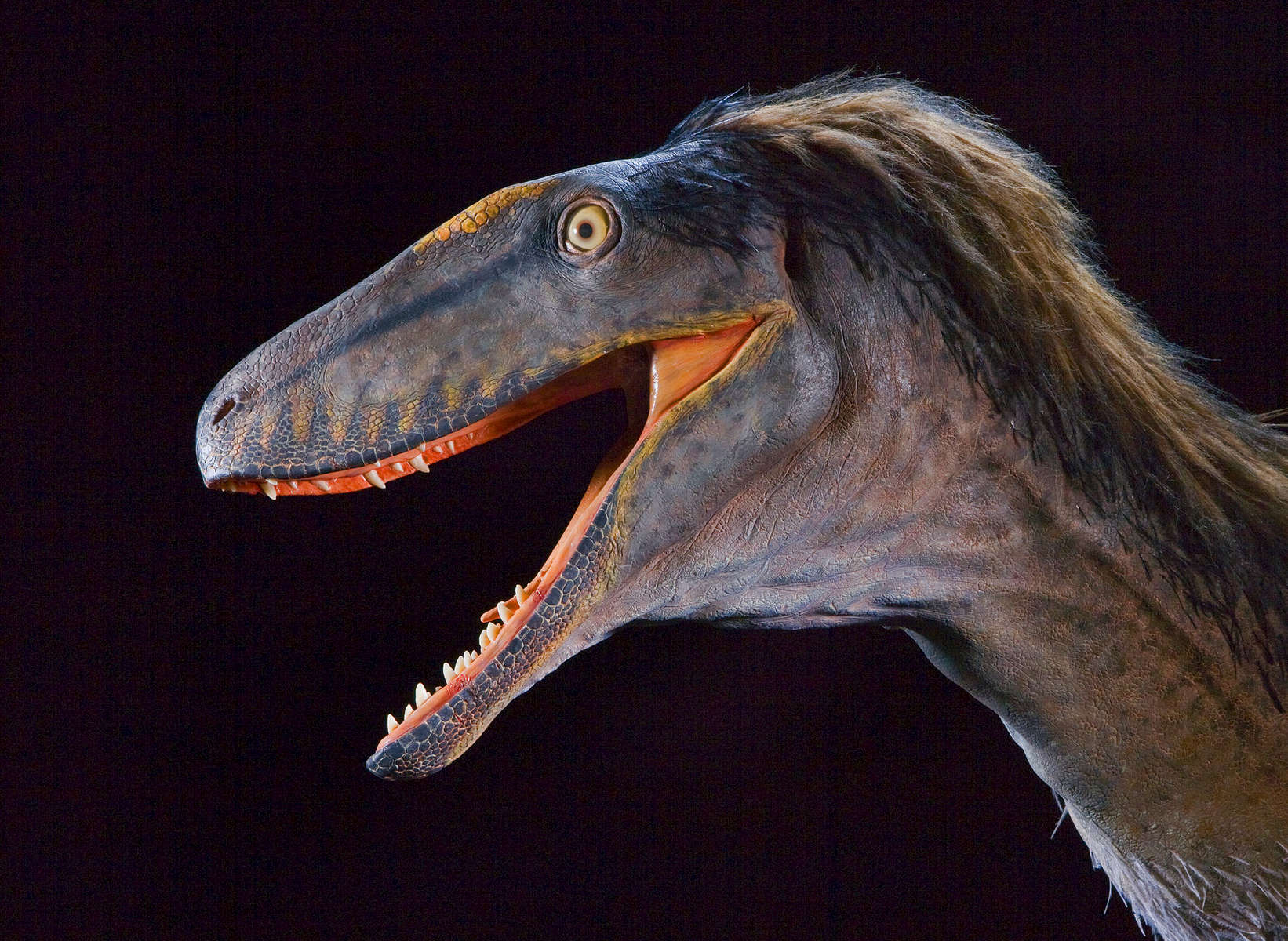 ST---Raptor-Rex-Dinosaur---2016---2C