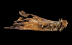 ST-boar-croc-Dinosaur---Fossil---2016---1127B