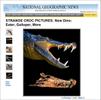 TS-NG-News---Crocodiles---2016