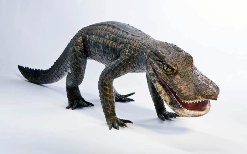 Duck Croc full body flesh model