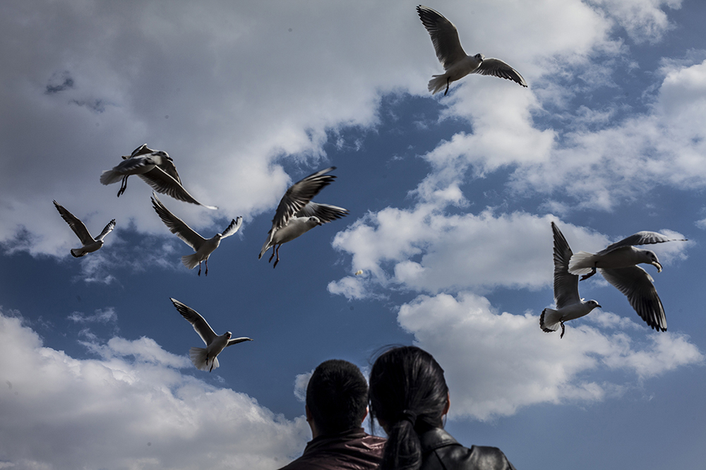 Locals watch seagulls at Dianchi lake on the outskirts of Kunming , Yunnan province, China. Dianchi lake has seen an increasing number of seagulls during recent winters, which could be attributed to the mild climate around the lake as well as strengthened protection by local government policies. In fact, according to researchers, the region around Kunming has experienced much more severe temperature increase and precipitation decrease in recent years.The gulls mainly migrate from Siberia's lake Baikal, Uvs Nuur Basin in Mongolia, and Bosten lake in China's Xinjiang region. Since discovering Dianchi lake first in 1984 , they've been back every winter, setting a record in 2015 when the number of seagulls exceeded 40,000 for the first time.#seagulls#dianchilake#climatechange#birdmigration#risingtemperatures#katharinahesse#ecology#globalwarming#yunnan