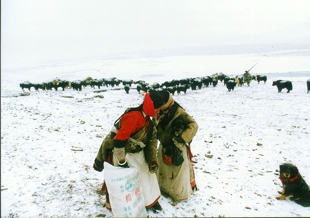 Tibetan herders with emergency donations after experiencing the worst winter storms in more than half a decade, Yushu (Tibetan autonomous ) prefecture, Qinghai, China.From September 1995 to spring 1996 Qinghai experienced the worst winterstorms in more than half a decade preceded by a summer drought. By the end of April 1996, 400.000 Yaks had frozen or starved to death along with the same number of sheep and goats, in all 40 % of the region's dimesticated animals.There are different theories about the degradation of Qinghai's ecological problems. Some blame the herders and overgrazing of the grassland.However, erratic wheather conditions such as early winters, summer droughts and rising temperatures are happening. {quote}In reality, global climate change is the real culprit behind the ecological changes on the Tibetan tableau{quote}, explains Wang Yongchen, founder of Green Earth Volunteers.#yushusnowblizzards#climatechange#katharinahesse#globalwarming#qinghai