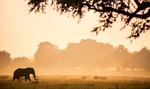 Ruckomechi Camp - Zimbabwe