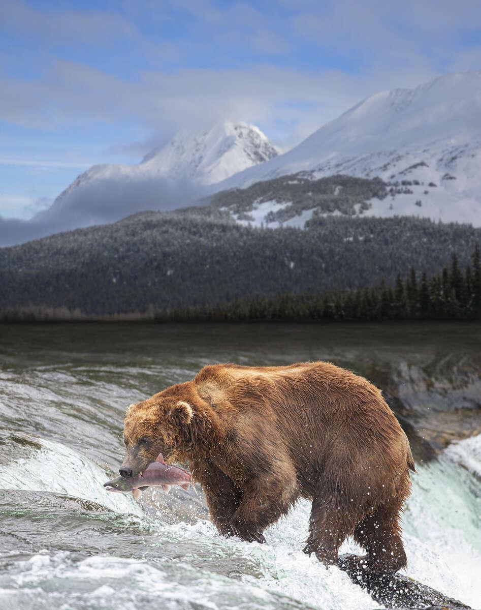 Alaska Bear Mountain