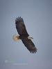 Homer Eagle