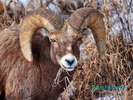 Big Horn in January