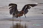 BrianHampton_Birds_NaturesBestApril2014_0176