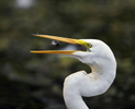 BrianHampton_Birds_NaturesBestApril2014_0637