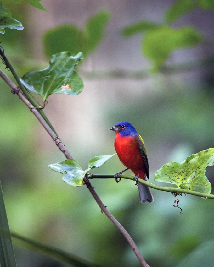 BrianHampton_Birds_NaturesBestApril2014_0875