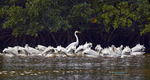 BrianHampton_Birds_NaturesBestApril2014_0902