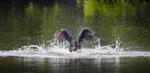 BrianHampton_Birds_NaturesBestApril2014_0951