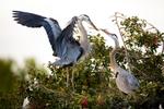 BrianHampton_Birds_NaturesBestApril2014_3508