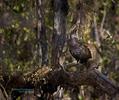 BrianHampton_Birds_NaturesBestApril2014_4136