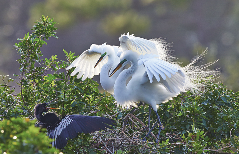 BrianHampton_Birds_NaturesBestApril2014_6675