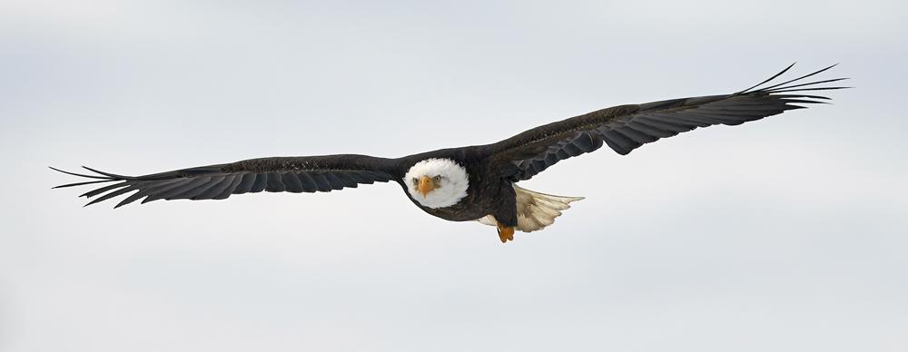 BrianHampton_Birds_NaturesBestApril2014_7276