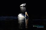 BrianHampton_Birds_NaturesBestApril2014_7728